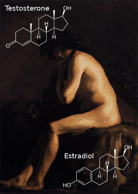 Paulus_Bor_-_Bacchus_Estradiol_Testosterone